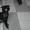 Брюссельский Бельгийский гриффоны и пти-брабансоны  #994374