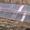 Парник для рассады (с поликарбонатом) #1480064