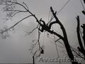 Удалить опасное дерево возле дома безопасно без автовышки.